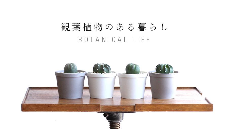 観葉植物 GENERAL SUPPLY