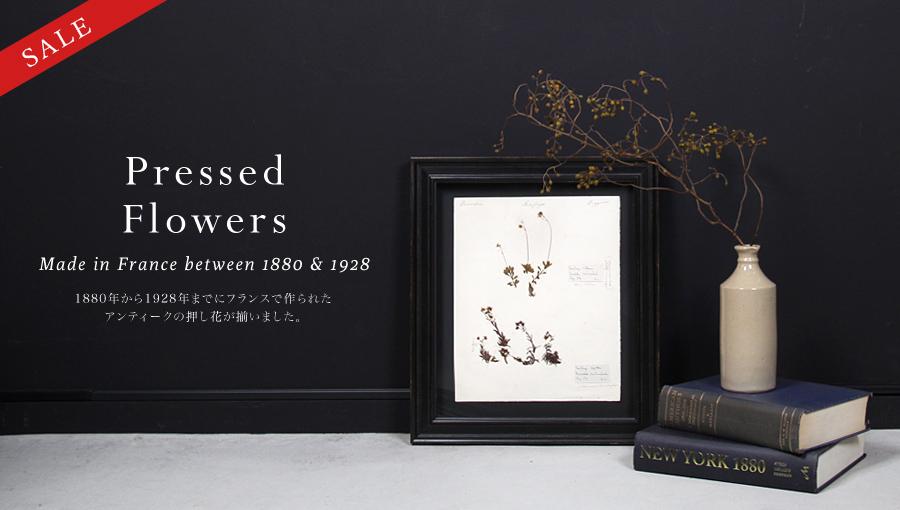 アンティークボタニカルアート 植物標本(押し花)