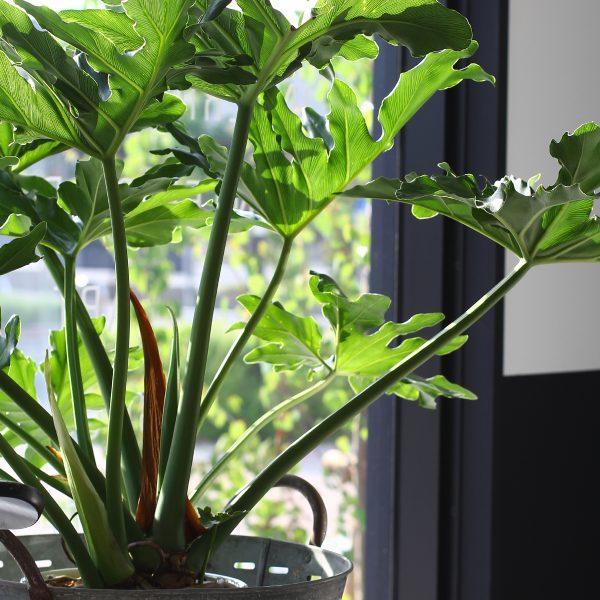 春の陽気と植物たち<br>インテリア盆栽
