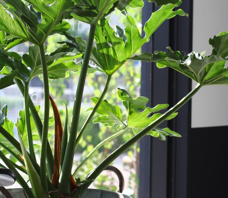 春の陽気と植物たち