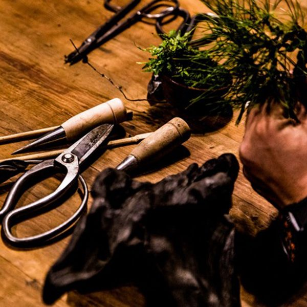 手のひらサイズのインテリア盆栽 <br>ワークショップ