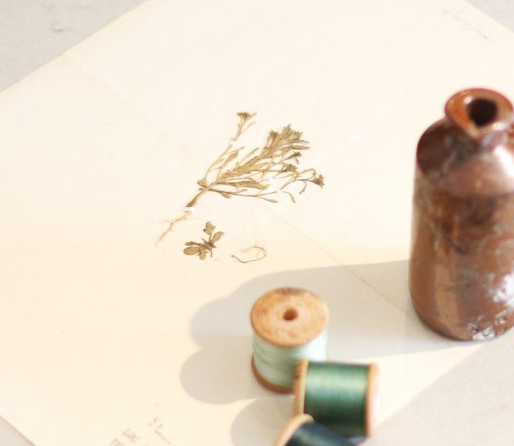 アンティーク押し花標本