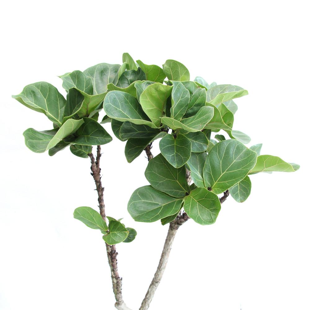 インテリアとして人気の高い観葉植物