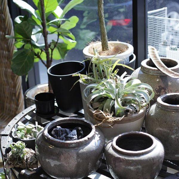 観葉植物のある暮らし