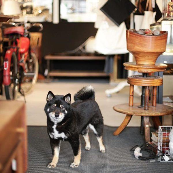私達の愛犬わらび最後のお店番