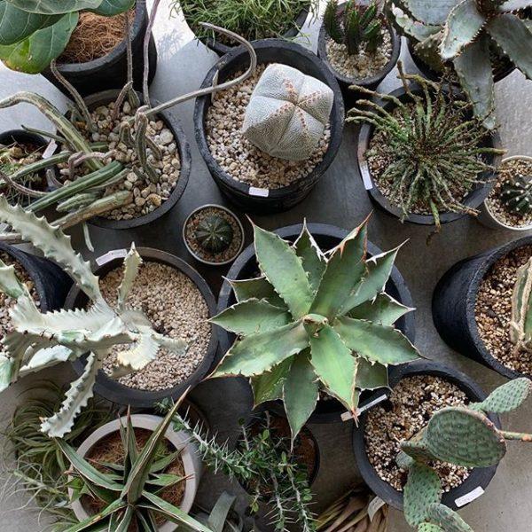 GENERAL SUPPLYの植物をご紹介します