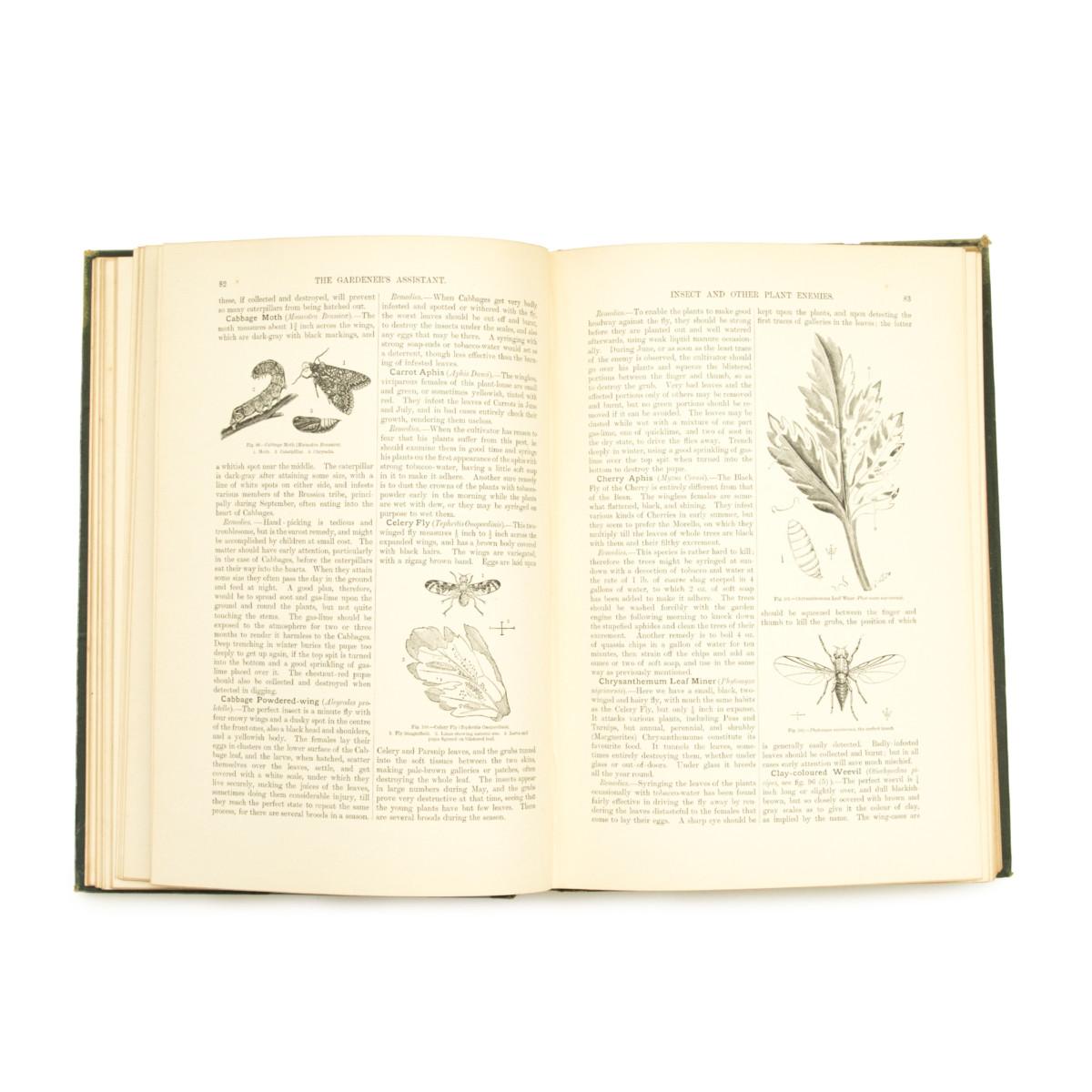 アンティーク 植物図鑑